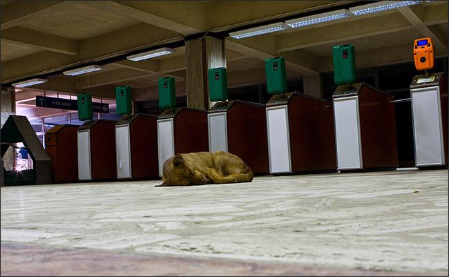 metrou61.jpg